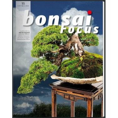 Bonsai Focus Nº11