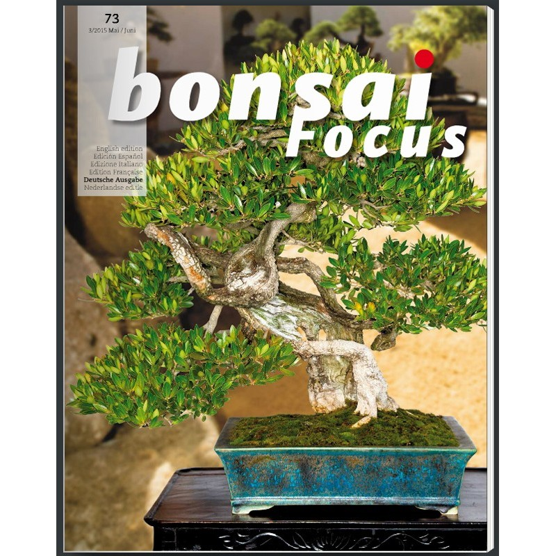 Bonsai Focus Nº12